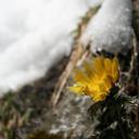 早春・雪国に遅い春の訪れ