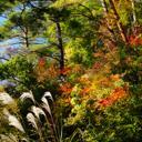秋・彩り鮮やか信州の紅葉