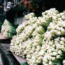初冬・村の風物詩「お菜洗い」