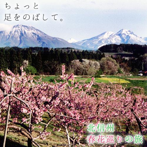 春の花巡り旅