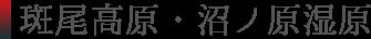 斑尾高原の水芭蕉